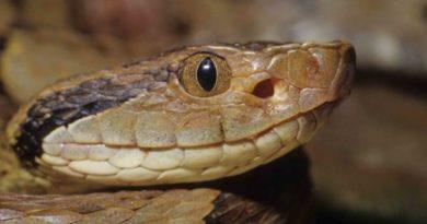 Agropoli: Serpente sbuca dallo scooter e spaventa il proprietario