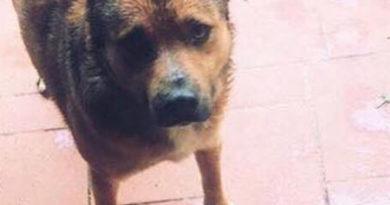 Buonabitacolo, episodio di crudeltà: veleno per lumache nella carne per cani, morto un animale